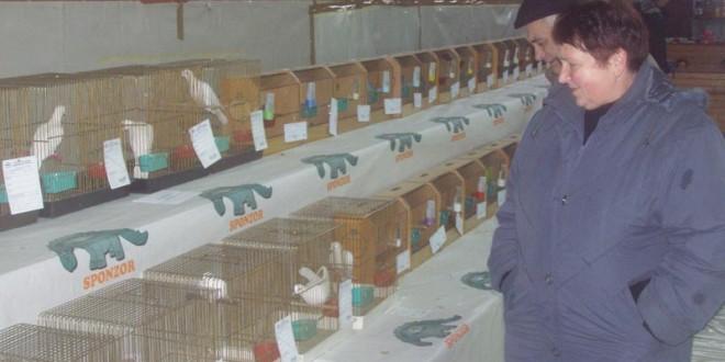 International exhibition of small animals
