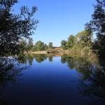 Ribnjak Gornji Hrascan (3)