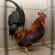 39. Međunarodna izložba malih životinja: Bit će najveća dosad