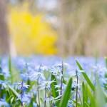 xxl_spring-flowers-741965-1280_742296
