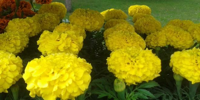 Sajam cvijeća u Pretetincu